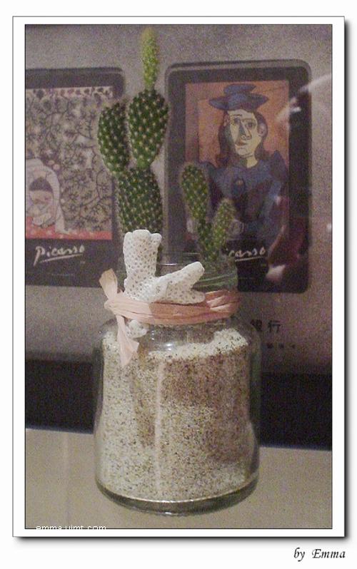 雞精瓶仙人掌小盆栽