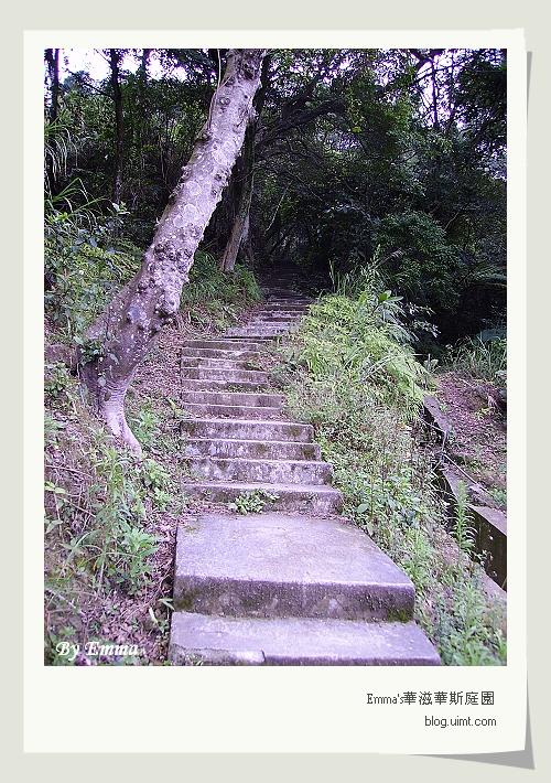 桂花林步道